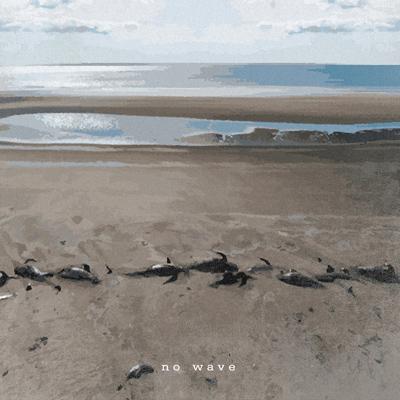 #alphasigma - No Wave