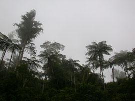 TreesMalaysia