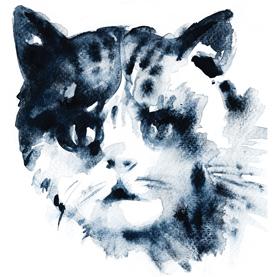 May Cat
